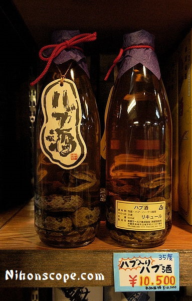 What is snake wine?